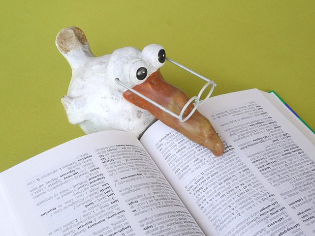 vocabulary words - toy bird with glasses reading dictionary